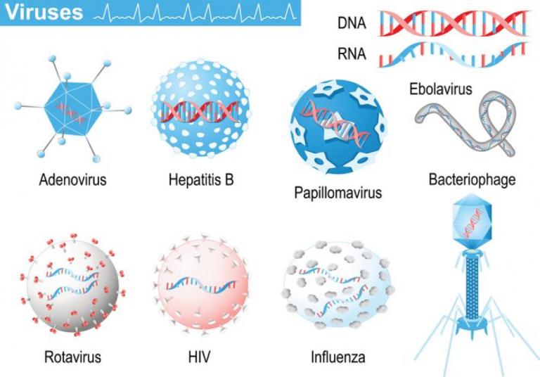 #Antibiotika #Anwendung bei #grippalem #Infekt #schadet ihre #Immunsystem!