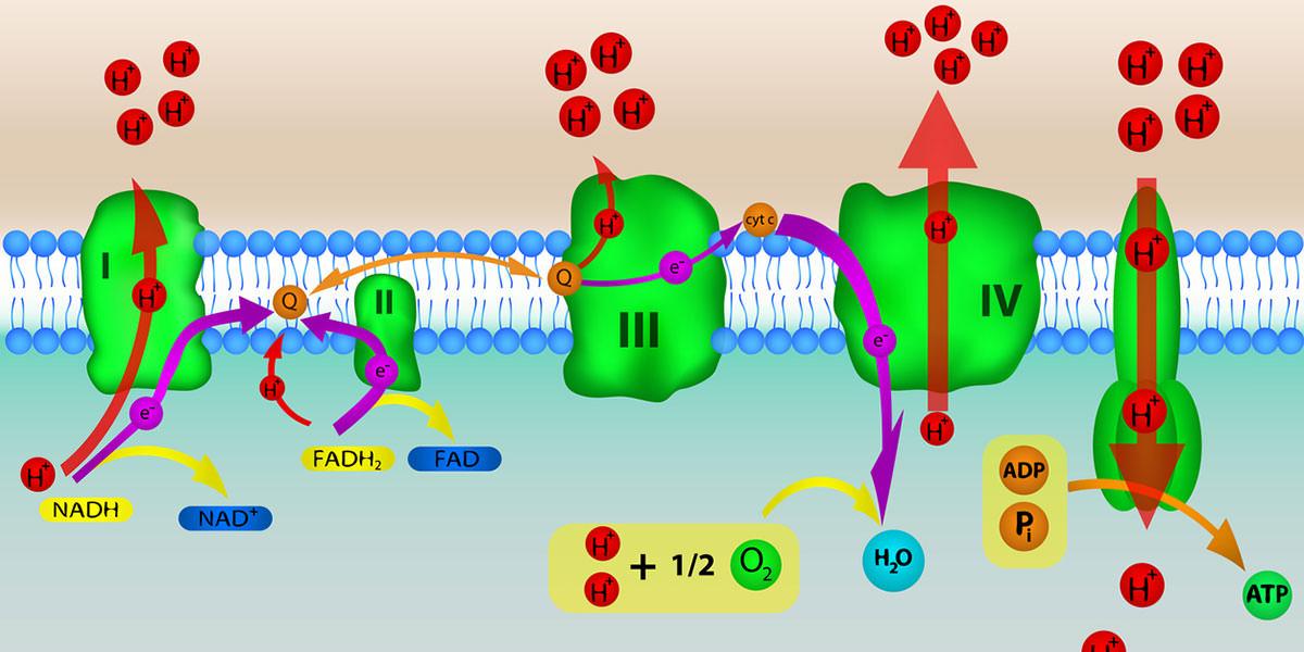 Mitochondriale Systemtherapie früher MitoEnergy Systemtherapie